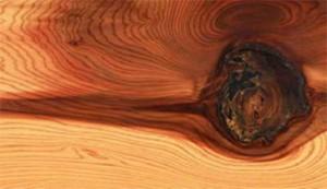 Сучки на древесине