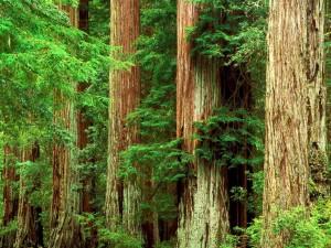 Виды лесных материалов